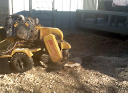Stump Removal in Des Moines and central Iowa